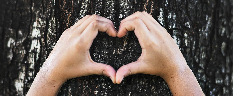 Unser Herz schlägt für Holz - schon immer! Bröcking Fenster